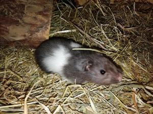 Hamster / Verden