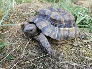Schildkröte / Achim