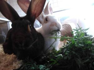 Hugo & Brösel suchen gemeinsam ein neues Zuhause. Viel Platz zum Toben und Buddeln sollte vorhanden sein.