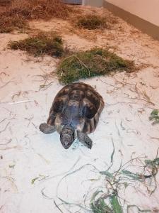 Schildkröte / Verden